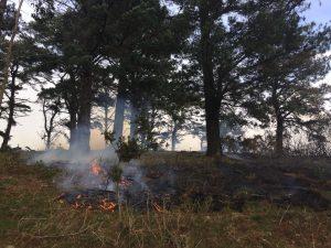 Incendio Cerredo 30-mar (7)