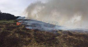 Incendio Cerredo 30-mar (8)