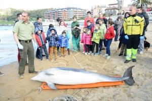 Delfín muerto en Brazomar (1)