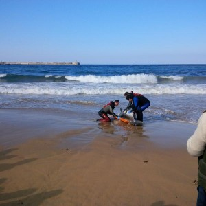 Delfín muerto en Brazomar (2)