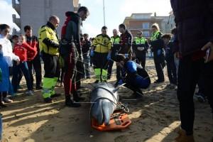 Delfín muerto en Brazomar (3)