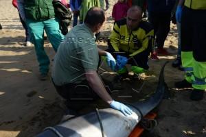 Delfín muerto en Brazomar (4)
