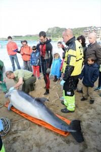 Delfín muerto en Brazomar (5)