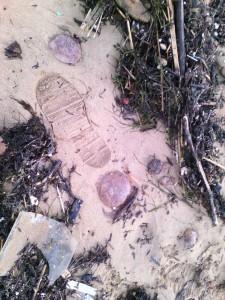 Medusas en Brazomar (3)