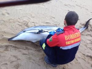 Delfín muerto Playa Mioño (foto Emergencias)