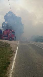 Incendio Forestal Alto de la Cruz (5)