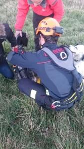 Rescate Perro en Cotolino (2)