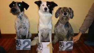 Agility Adiestramiento de perros (5)