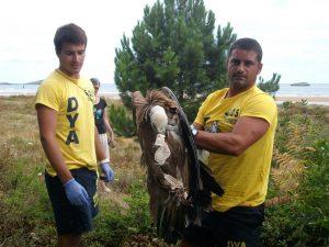 DYA rescata buitre en Oriñon (2)