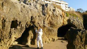 Bomberos retiran avispa asiatica playa Ostende (1)