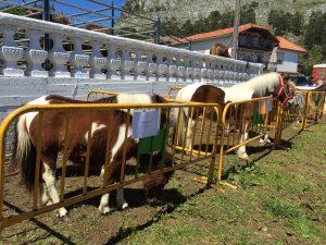 Feria Ganado Helguera 6-Mayo-17 (4)